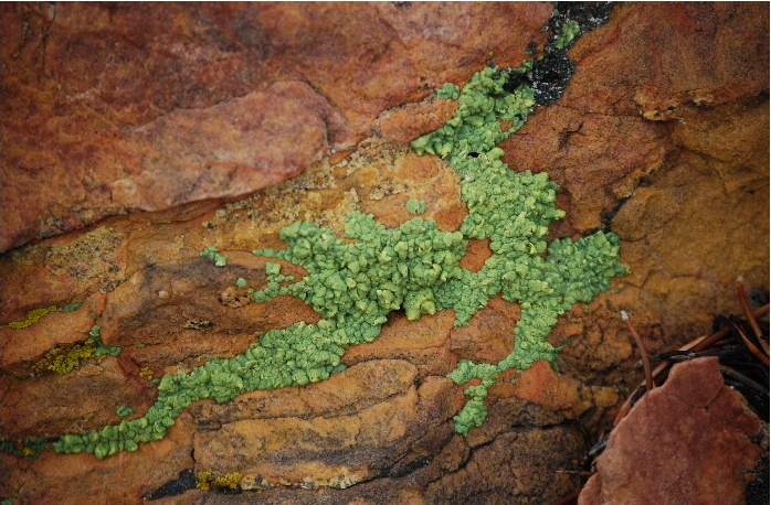 Lichen - Yellow Paint