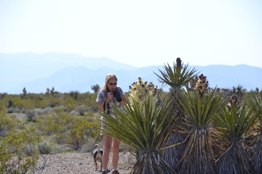 Mojave Yucca - size.